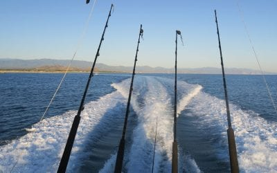 Baja Sport Fishing Mexico Sea of Cortez